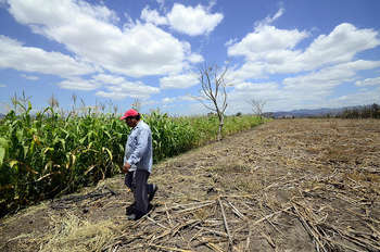 Agriculture, Honduras - Photo credit: CIAT International Center for Tropical Agriculture / Foter / CC BY-NC-SA