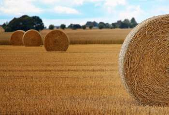 Agriculture - Photo credit: Infomastern / Foter / CC BY-SA