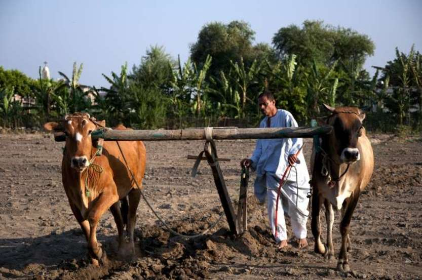 Agriculture, Egypt - Photo credit: Marwa Morgan / Foter / CC BY-NC-ND