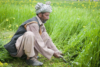 Agriculture in Afghanistan