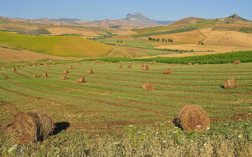 Agriculture - Photo credit: orientalizing via Foter.com / CC BY-NC-ND © 2016 FOTER.COM Blog  Contact  Terms  Sitemap  Privacy Policy