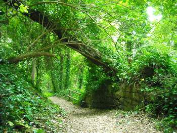 Bosco Cratere degli Astroni - Author Kasbandy