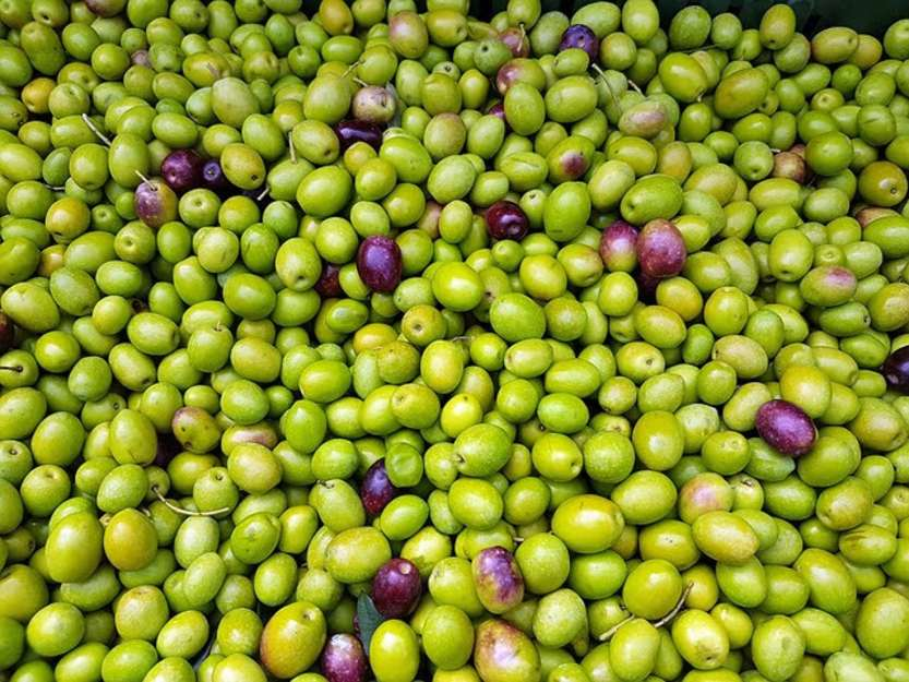 Olive made in Spain