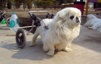 Dog wheelchair - foto di xiaming